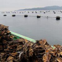 Japan, Ishinomaki, fishing, 3.11, 2011, March 11, tsunami, earthquake, recovery, efforts, oysters