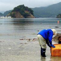 Tohoku, Japan, Ishinomaki, fishing, oysters, re-building, recovery, efforts, 3.11, March 11, 2011, tsunami, earthquake