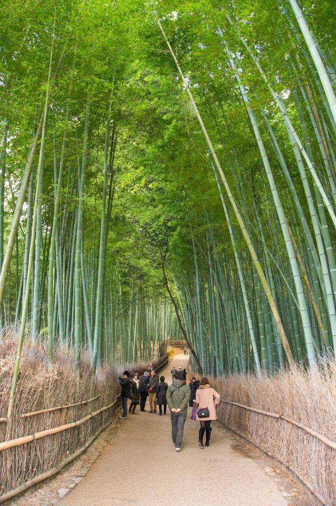Sagano Bamboo Forest, Arashiyama, Kyoto, Japan
