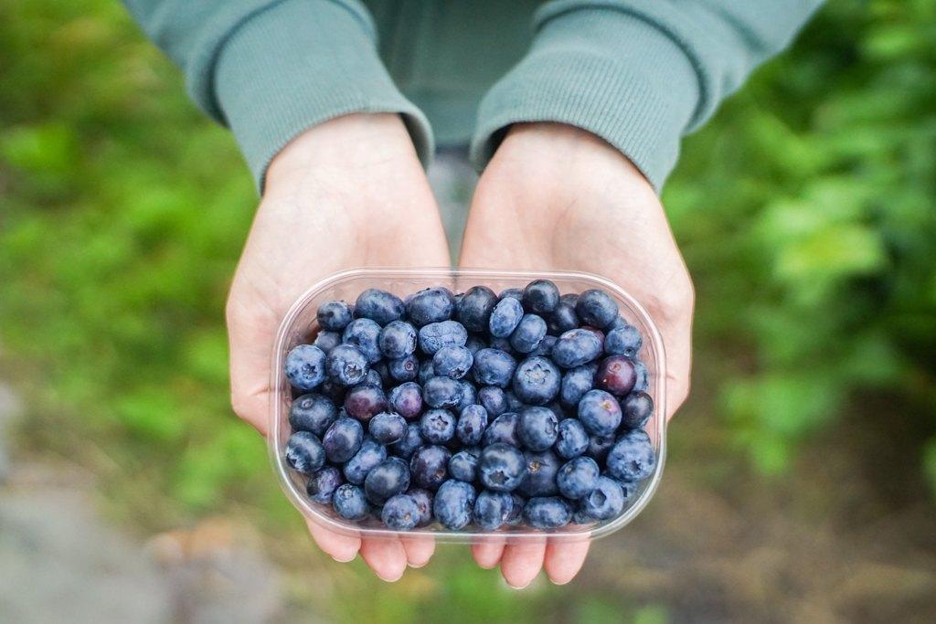 Blueberry picking, Finland