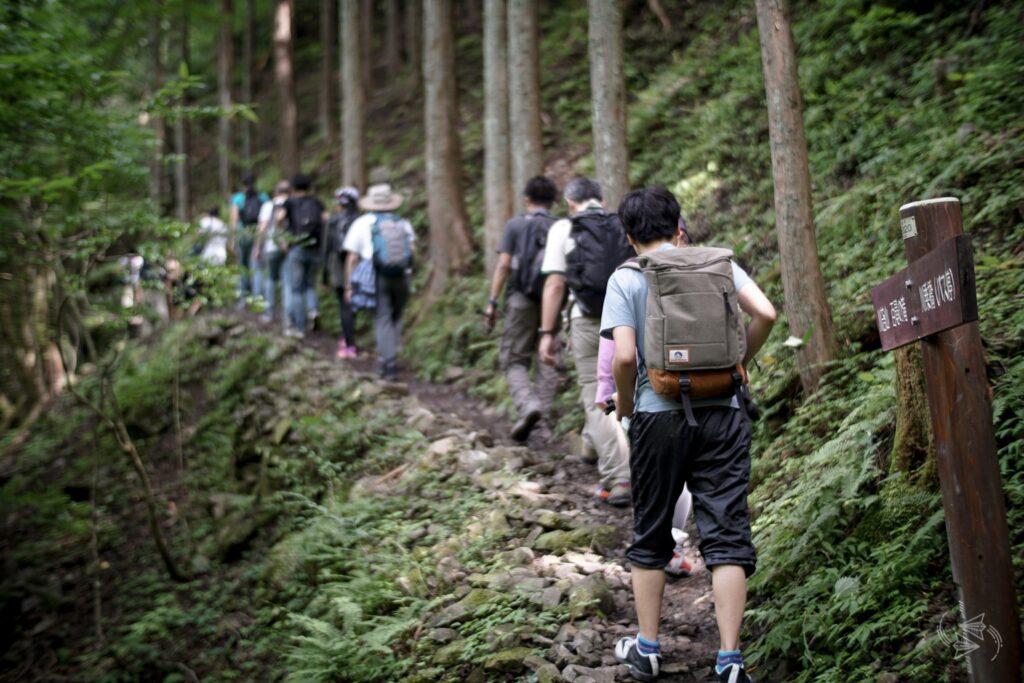 shinrin-yoku, forest bathing, japan