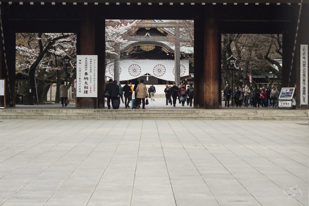 cherry blossoms yasukuni shrine tokyo