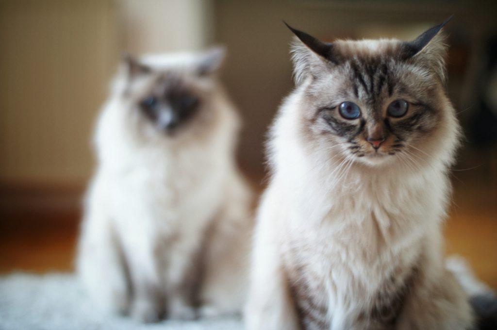 Housesitting Cats Berlin