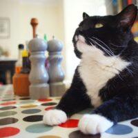 Housesitting pets