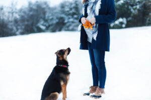 Photo of dog and pregnant woman by Jonathan Smith
