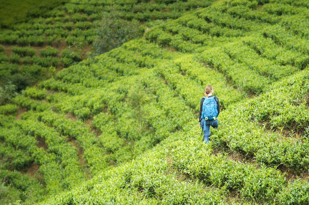 My Sri Lanka - Tea plantation