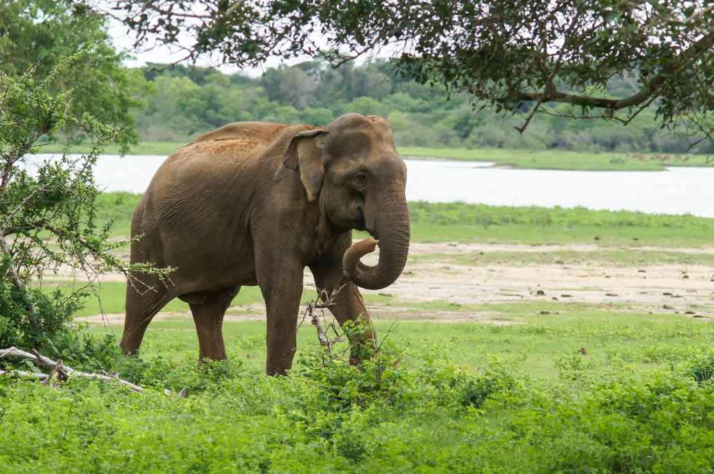 essays for kids in sri lanka Check out our top free essays on tourism in sri lanka to help you write your own essay.