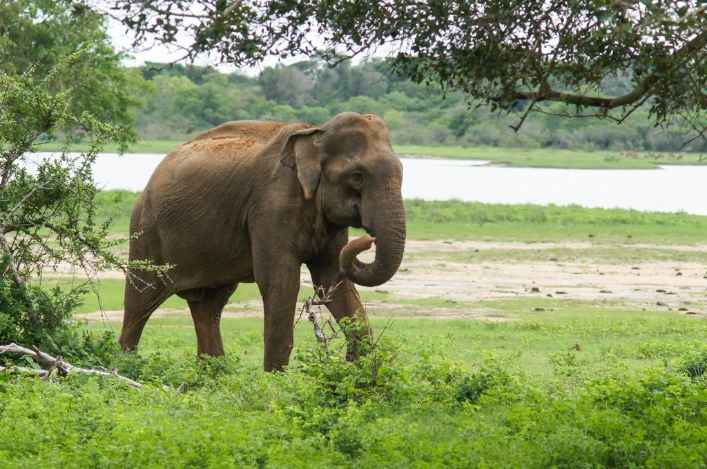 My Sri Lanka - Yala