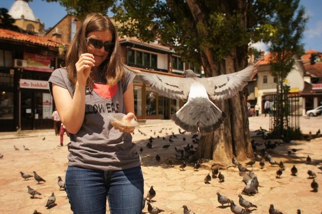 Sarajevo City Square Pigeons
