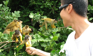 Squirrel Monkeys, Amazon Pampas, Bolivia