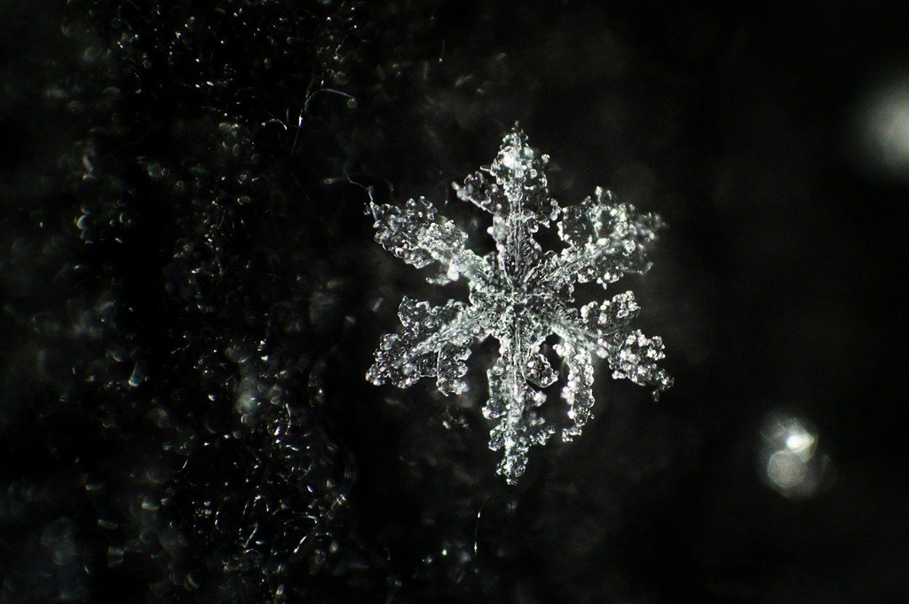 The Month in Photos: January 2014 - Snowflakes