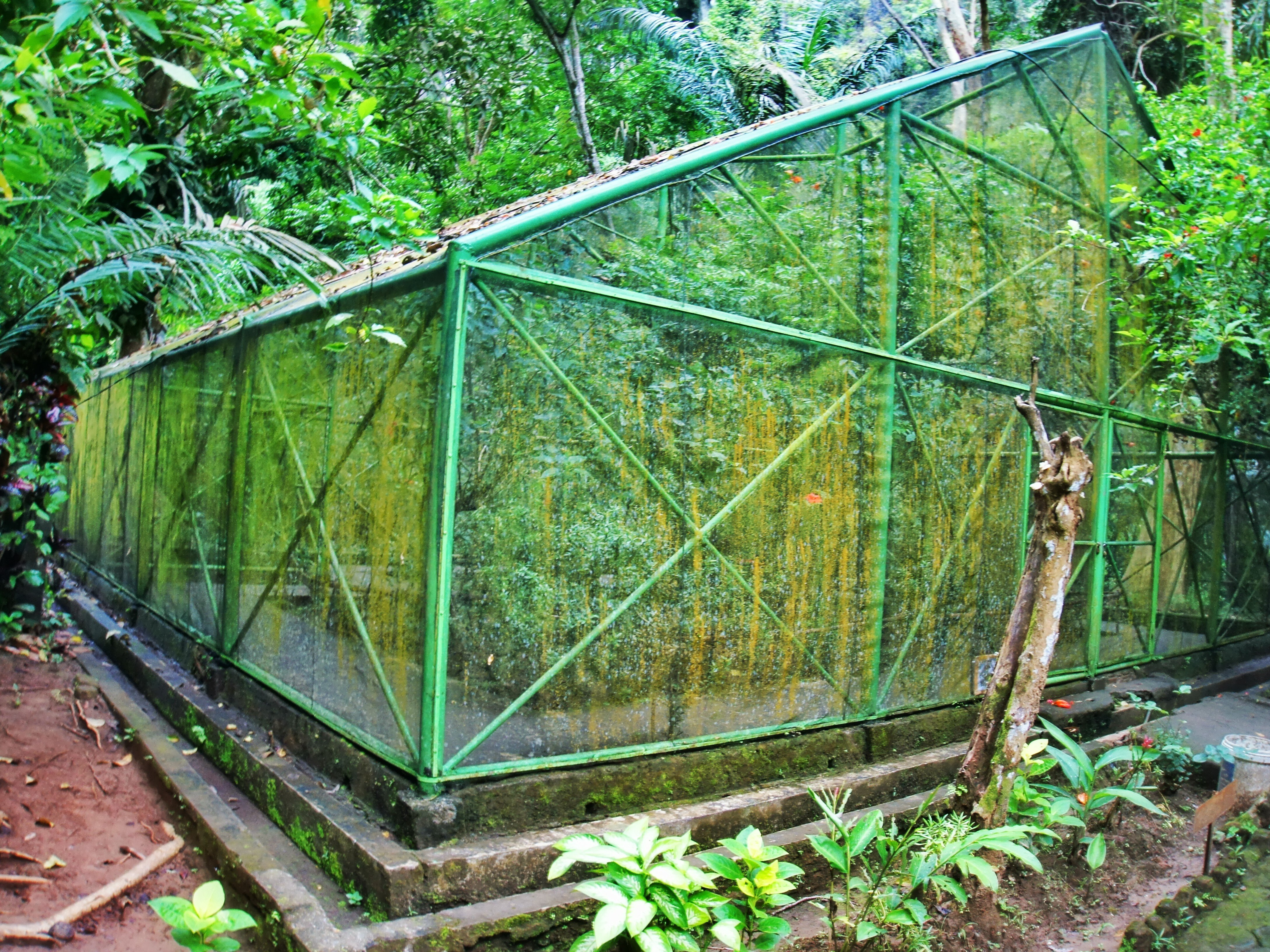 The solitary cage housing a handful of live butterflies in the Butterfly Museum.