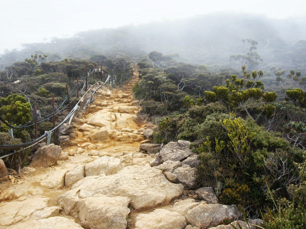The rocky trail leading up to Panalaban rest stop shrouded in fog and with shrubbery on either side.