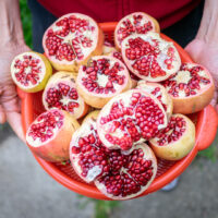 Hai holds a red bucket full of pomegranates that have been cut in half, exposing the red fruit.