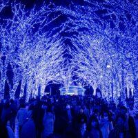 shibuya ao no dokutsu winter illuminations